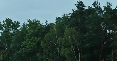 Zdjęcie przedstawia las oraz fragment łąki, na której stoi sarna.